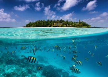 snorkeling-alle-Seychelles.jpg