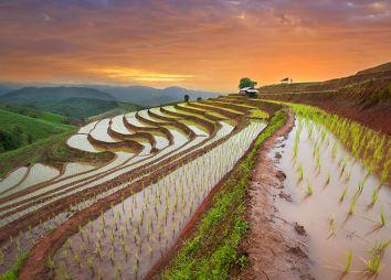 risaie-in-cina.jpg